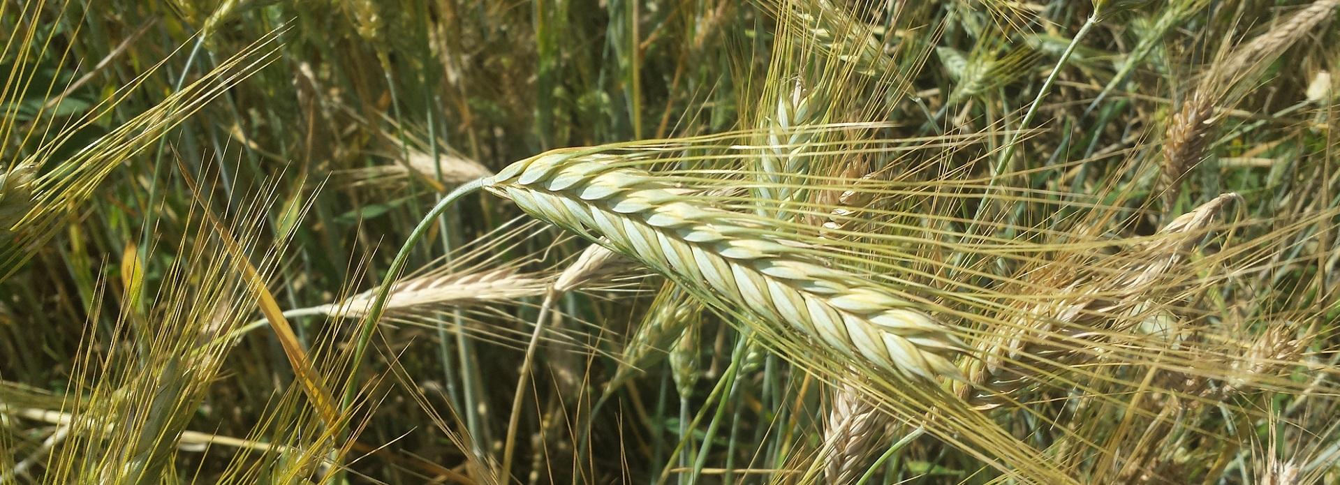 CONŢEŞTI Agricultura-Industrie-Comerţ